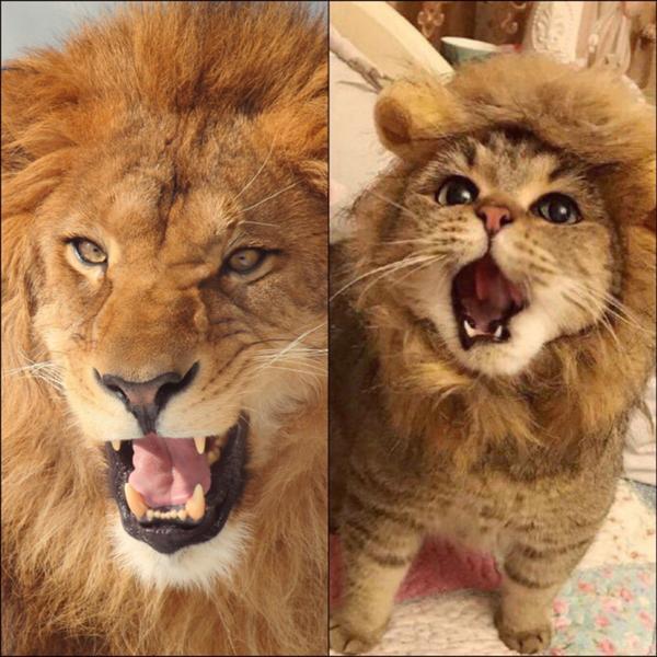 ライオン サラブレッド クラブ